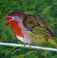 Robin by Raymond Farrimond