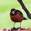 Robin by Renee Rumsey