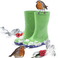 Robins And Green Wellies by Warren Photographic