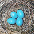 Robin's Eggs by Emily Page