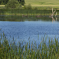 Rochester Wildlife Pond 1 by John Brueske