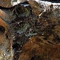 Rock Abstract With A Web by Miroslava Jurcik
