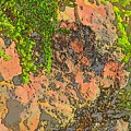 Rock And Shrub Abstract I  by Linda Brody