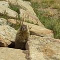 Rock Critter by Sara Stevenson