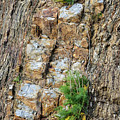 Rock Cutting 2 by Werner Padarin