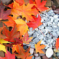 Rock Garden Autumn Leaves by Baslee Troutman