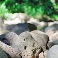 Rock Garden by Michael Scott