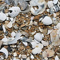 Rock N Shells by Marcie Daniels