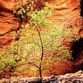 Rock Tree by Scott Kemper