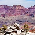 Rockin' Canyon by T A Davies