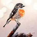 Rockin Robin  by Luna Vermeulen
