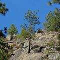 Rockin' Tree by Ben Upham III
