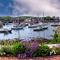 Rockport In Bloom by Mark Myhaver