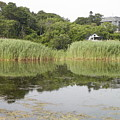 Rockport Reeds And Reflections by Gina Sullivan