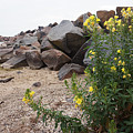Rocks And Flowers by Brooke Bowdren