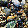 Rocks And Shells by Charles Harden