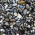 Rocks And Sticks On The Beach by Tom Janca