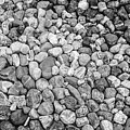 Rocks From Beaches In Black And White by Deborah Brown