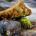 Rocks In The Creek by Maria Coulson