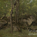 Rocks In The Forest Of Fontainebleau by Jean-baptiste-camille Corot