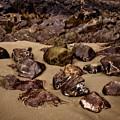 Rocks On The Beach by Venetta Archer