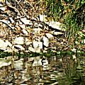 Rocks Reflecting Off Water by Lori Faircloth