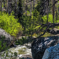 Rocks Water And Knarly Branches by Nancy Marie Ricketts
