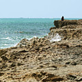 Rocky Limestone Cliff Blowing Rocks Preserve Jupiter Island Florida by Michelle Constantine