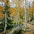 Rocky Mountain Aspens by Brent Parks