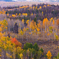 Rocky Mountain Autumn View by James BO Insogna