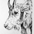 Rocky Mountain Goat by Derrick Higgins