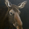 Rocky Mountain House Moose by Janice M Booth