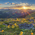 Rocky Mountain National Park Summer Sunflowers Pano 1 by Rob Greebon