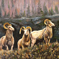 Rocky Mountain Sheep by Connie Tom