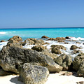 Rocky Shore--cancun by Connie Diane Richards