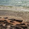 Rocky Shore by Heather Kenward