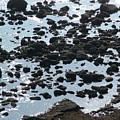 Rocky Shore by John Loyd Rushing