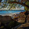 Rocky Shore by Roger Monahan