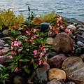 Rocky Shores Of Lake St. Clair- Michigan by Joann Copeland-Paul