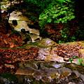 Rocky Stream by Lisa Wooten
