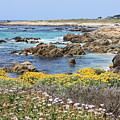 Rocky Surf With Wildflowers by Carol Groenen