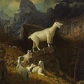 Rocky_mountain_goats by Celestial Images