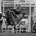 Rodeo Bull Riding 1 by Bob Christopher