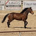 Rodeo by Lea Cypert