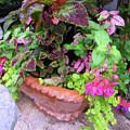 Roger's Gardens Begonia by Steve Brown