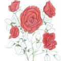 Rojo Cinco by Dusty Reed