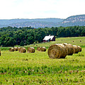 Rolled Bales by Paul Sachtleben