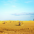 Rolled Hay by Onyonet  Photo Studios