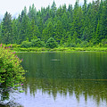 Rolley Lake  In The Rain by Sharon Talson