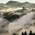 Rolling Fog At Sunrise In The Skofjelosko Hribovje Hills With St by Reimar Gaertner